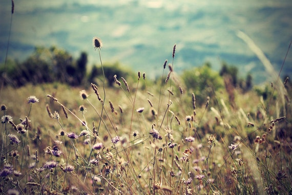 wildflowers on mountainside