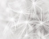 Dandelion Abstract - Original Photographic Print 5x7 Matted to 8x10 - contemplativecajun