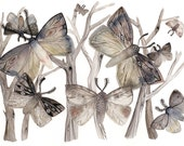 Moth Watercolor Print- Moths  No. 1 - large print, grey, autumn, earth tones, pattern - amberalexander