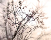 Fine Art Photography Red Berries and Branches Winter Holiday Gift Christmas Home Decor Soft Focus Ethereal Poe Team Altered 8X10 - AJoyfulStudio