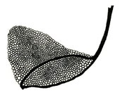 Butterfly Net, 5x7 Black and White Artist Print, Limited edition artwork - EndlessDrawings