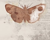Moth Art - Leopold - Butterflies and Moths Series - 8x10 - rustic Collage Art - papermoth