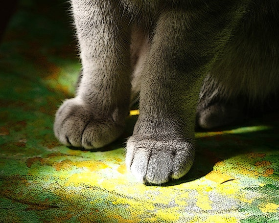 Cat Photography, spring green, cat paws,  Cat Painting fine art photography print 8x10