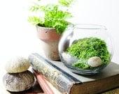 Live Plant Office Terrarium: Mini Indoor Desk Garden...Back To School - DoodleBirdie