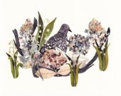 Mourning Dove, Hydrangeas, and Snow Drops - Archival Print - unitedthread