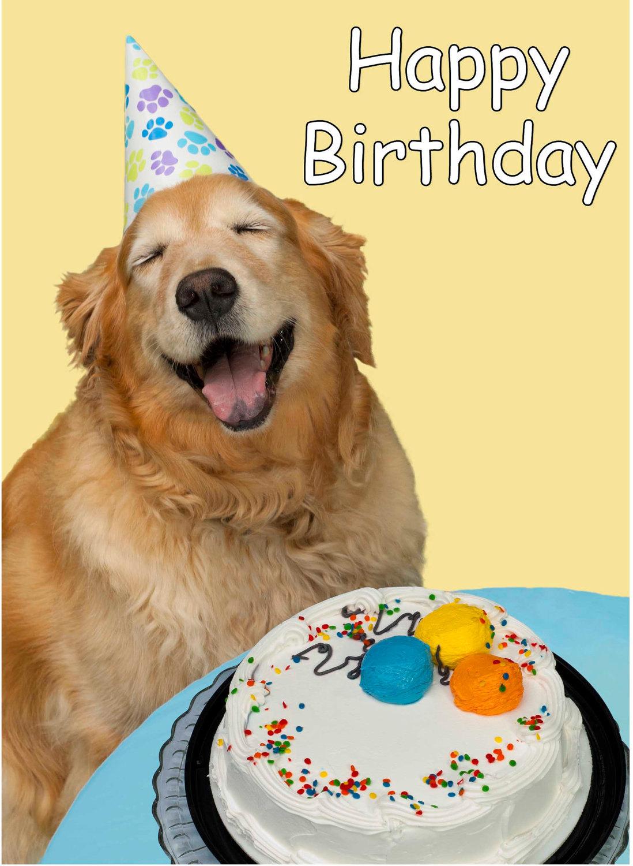 Cute Dog Happy Birthday Card by RlynnPhotography ZoK8IxBT