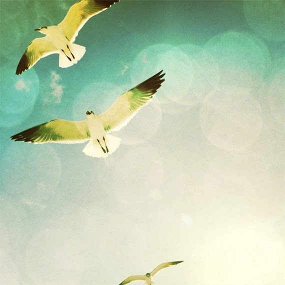 Free as a Bird - 8X8 Fine Art signed Photograph, white seagulls in flight, beach, blue sky with sun flare, inspiring