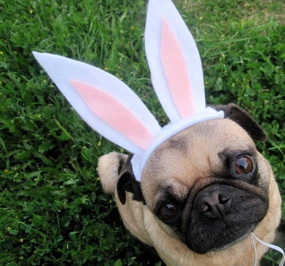 white and pink easter bunny headband for dogs