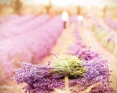 French Country Photography - Lavender Harvest 8x12 Fine Art Photograph, Home Decor, Wall Art - GeorgiannaLane