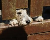 Cute dog print, pushing head under fence, brown tones, dog paws, French scene - digital photographic print