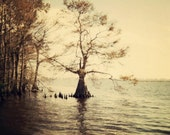 everglades  5x7 fine art photograph - PhotogenicGallery