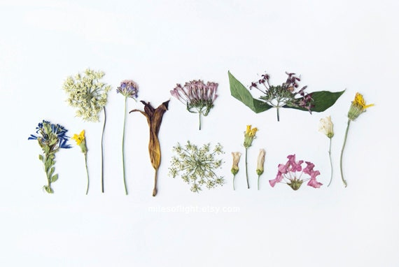 Summer Flora - 8x10 Fine Art Photographic Natural History Print. Minimal. Natural Home Decor. Indoor garden botanical. Mother's Day