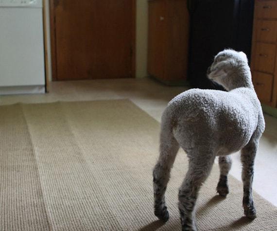 Fine Art Lamb Photo