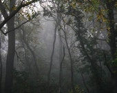 Foggy Landscape Photograph trees morning grey gray dark leaves woods forest woodland 8x10 - FirstLightPhoto