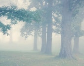 Foggy Tree Photo - early morning, green, summer, warm, dreamy - Through the Mist - FirstLightPhoto