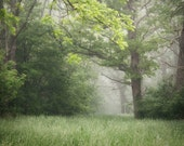 Summer Woodland Photograph - dreamy morning fog calm retreat serene green trees - FirstLightPhoto