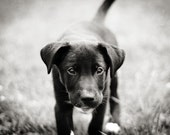 Shelter Dog Black and White Photography Puppy 5x7
