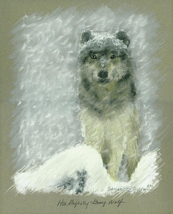 His Majesty, Gray Wolf, Framed Original Pastel