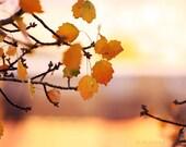 Autumn fall leaves - Autumn photography - Mustard orange - Painting Autumn II - Surreal autumn photo - sunshineartdesign