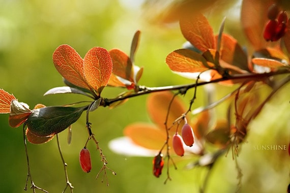 Autumn photo - Fall leaves Summer end Fine art photography orange leaves red lime green affordable home decor