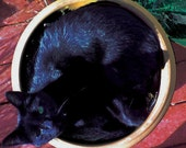 Sunbathing Kitty In A Flower Pot - 11x11 photo