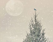 Christmas Photography - Holiday Gift - Little Blue Bird - Dreamy and Vintage Inspired  - Original and Signed - Fine Art Photograph - DreamyPhoto