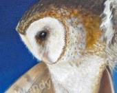 8x10 Signed Art Print of Acrylic Painting of a Barn Owl in Flight Painting entitled Coming Home.