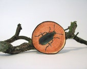 fake woodslice and beetle print brooch woodlands series - natural history - beetle print - redstitchlab