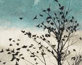 Art Print Etching, February Visit, Doves Fly Away - 88editions