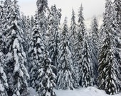 "Fine Art Photography, Winter Scenic Photo Art Print,  ""Winter Snow Scene  "" - Photomom101"