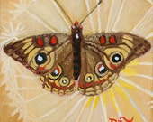 "Buckeye Butterfly and Danelion Seed Pod 8"" x 8"" PRINT - insect art, butterfly painting, butterfly art, yellow, wildlife painting - ReneeThompsonDesigns"