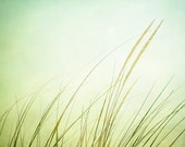 "Grass Photography - light green - beach grass - fine art photography - coastal wall art - pastel pale - 5x7 Photograph, ""Just Breathe"" - CarolynCochrane"