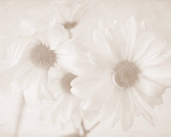Daisies II - Fine Art Photography - Flowers, Spring, Sepia, Home Decor, Wall Art, Summer - 8x10