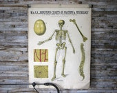 Anatomy and Physiology Charts - W. & A.K. Johnston - Set of 8 - jerseyicecreamco