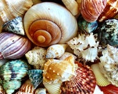 1 Gallon Large Ocean Mix Seashells (40-50 pcs.)