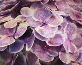 Hydrangea Flower Print - Purple Plum Country Floral Shabby Chic Home Decor Art Photography - SevenElevenStudios