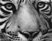 "D. Boggs     ""White Tiger""  8""x10""  Giclee Fine Art Print - GoldenBearStudio"