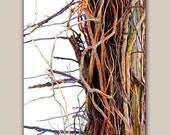 Tangled - WoodsongStudio