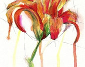Tiger Lily - PRINT of original ink drawing by Abby Bunnell - SacredVesselStudio