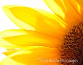 Sunflower 2, 5x7 Fine Art Photography, Floral Photography, Flower Photography - CindiRessler