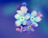 """Forget Me Nots - Flower Photography - Blue Floral Wall Art - 8x8"""""""