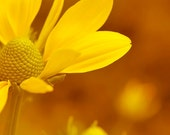 Yellow Floral Wall Art - Summer Flower Photography - 8x10""