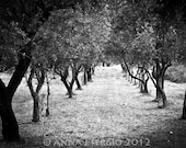 Black and White Trees - Photography - Fine Arts - Nature - FlowerFairyWorkshop