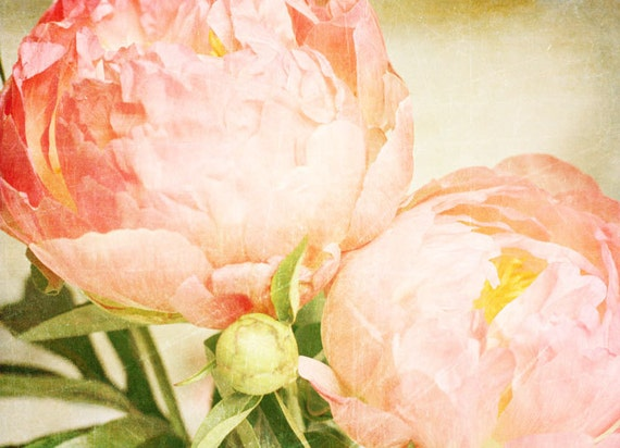 Flower Print, Pink Peonies, Home Decor, Fine Art, Photography, Flower Photography, Romantic Print