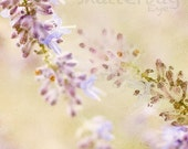 Abstract Photography Print, Lavender Macro Photo, Modern Home Decor, 8x8 Dreamy Nature - TheShutterbugEye