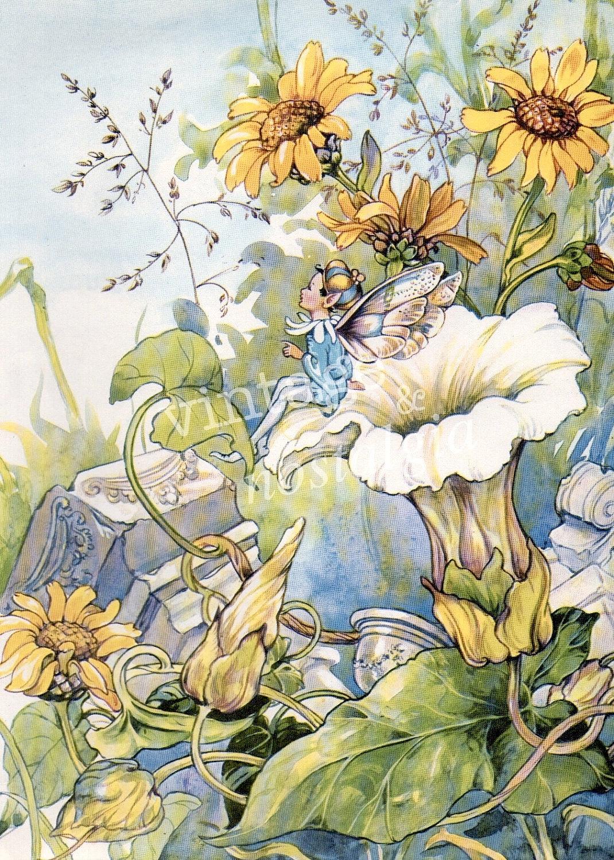 Unicorn And Fairies, Fairies And