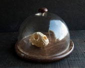 Large Glass Display Dome with Rustic Wooden Base - TheVintageParlor