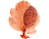Sea Fan Coral Red Orange Nautical Vintage Style Art Print - brightforest