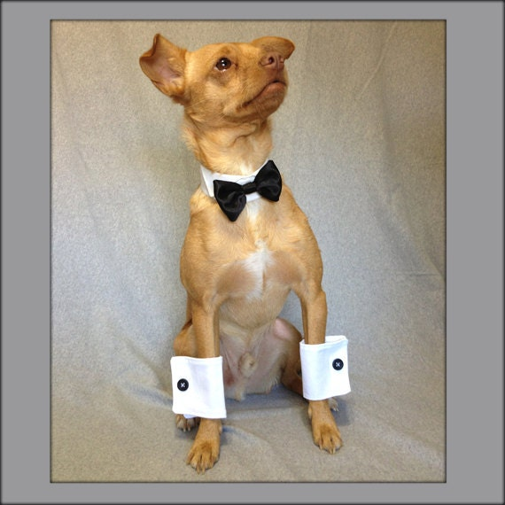 Black Satin Bow Tie Collar and White Shirt Cuffs Wedding Picture Set for a Dog or a Cat