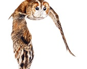 Tawny Owl - fine art print, 11 x 8 in, owl painting, bird painting, owl watercolour - marieburke1